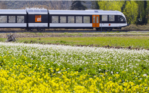 FGC train and flowers