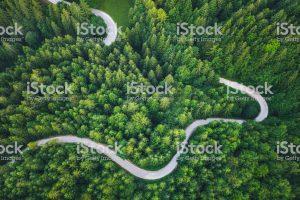 Carretera i arbres